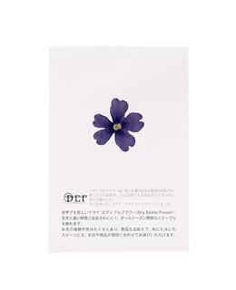 Dried blue verbena edible flowers - Neworks
