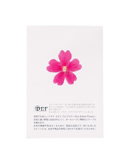 Dried pink verbena edible flowers - Neworks