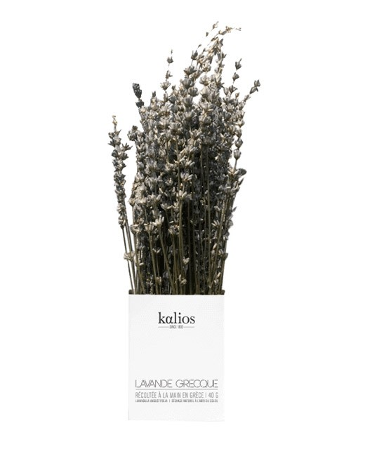 Greek lavender branch - Kalios