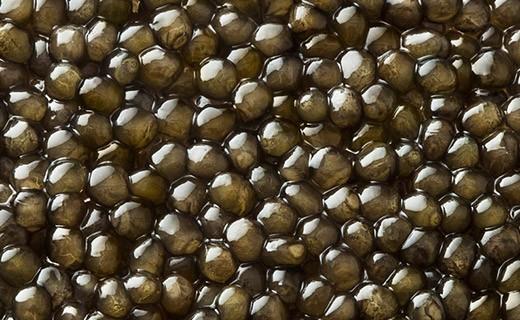 Osetra Gold Caviar 125g - Kaviari