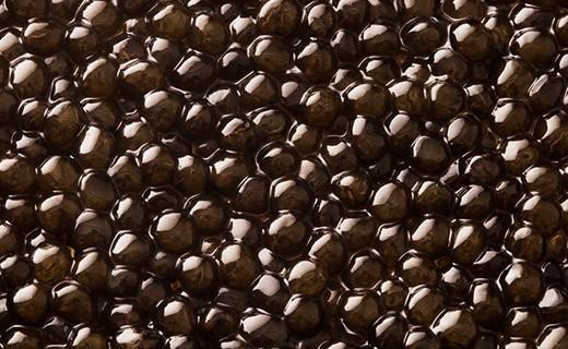 Osetra Prestige Caviar 30g - Kaviari