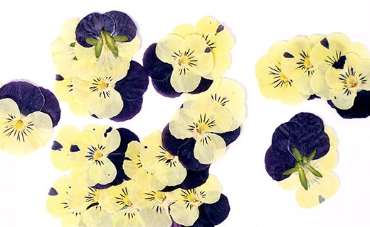 Dried pansy edible flowers - Neworks