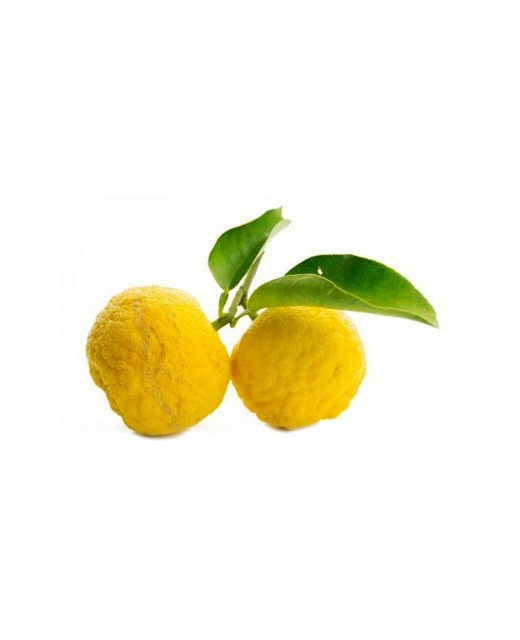 Fresh Yuzu from Kito - Bando Foods